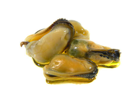 oysters isolated on white background 免版税图像