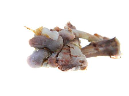 bones isolated on white background
