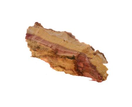 tree bark isolated on white background