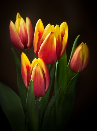 baclground: Yellow red tulips bouquet on black baclground