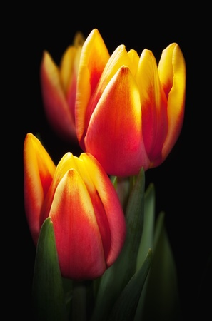 vases: Yellow red tulips bouquet on black baclground