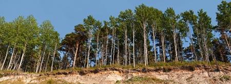 breakage: Panorama del bosque en el borde de la ruptura
