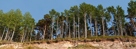 breakage: Panorama of the forest on the edge of the breakage Stock Photo