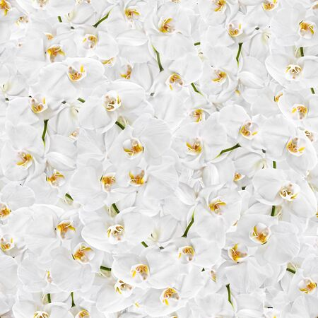 Floral background. White orchid seamless texture photo