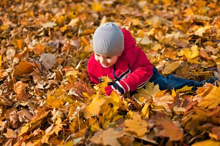 A little boy played with fallen autumn leaves photo