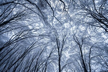frozen trees in winter forest photo