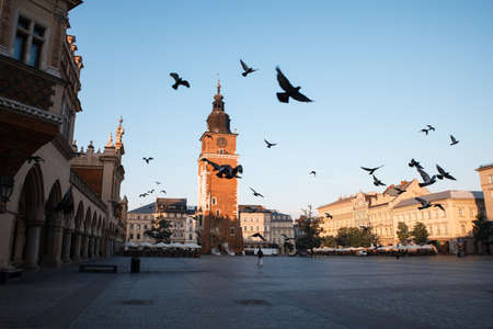 main market: Pigeons in the morning Krakow main market square  Poland, Europe Editorial