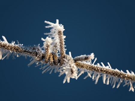 Cold. Barbed wire covered with hoarfrost against the blue sky photo