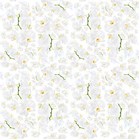 Floral . White orchid seamless pattern photo