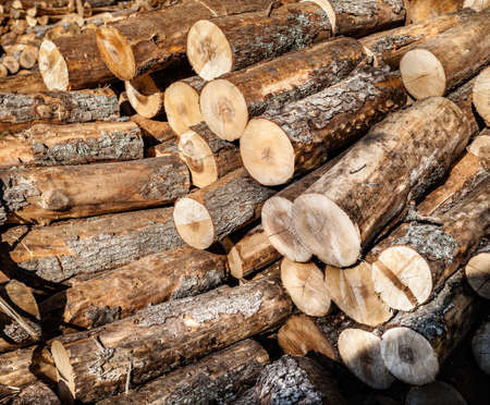 Pile of wood logs ready for winter photo