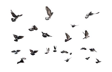 Duiven vliegen. Veel vogels op een witte achtergrond Stockfoto