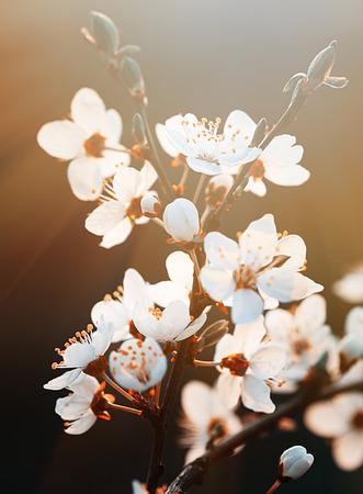 Lente. Lente bloemen bloeien in een zonnige dag. Prachtige natuur scène met bloeiende boom en zon flare. Zonnige dag. Mooie Orchard achtergrond. Stockfoto