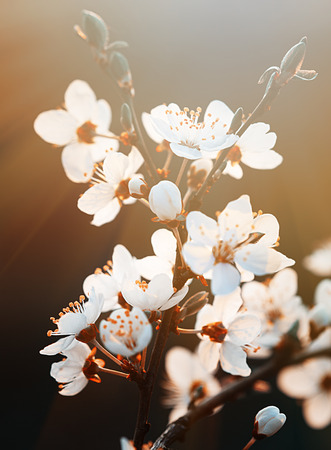 Springtime. Spring flowers blossom in sunny day. Beautiful nature scene with blooming tree and sun flare. Sunny day. Beautiful Orchard background.