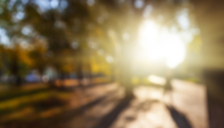 autumn city: Defocused image of autumn city park with trees and sunlight Stock Photo