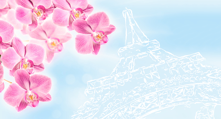 pink orchid: From Paris with Love. Pink orchid on stylized image of the Eiffel Tower. Art background