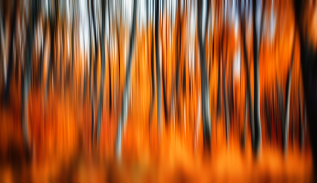 intentional: Abstract image of trees in an autumn forest. Intentional motion blur