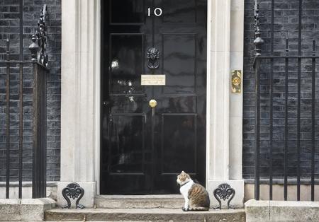 ロンドン、イギリス - 2017 年 4 月 19 日: ラリーをという名前の猫は 10 ダウニング街猫、内閣府主席ネズミ捕り官。ラリーは、茶色と白のぶちです。