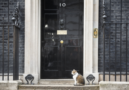 LONDON, UK - Apr 19, 2017: The cat named Larry is the 10 Downing Street cat and is Chief Mouser to the Cabinet Office. Larry is a brown and white tabby. Editorial