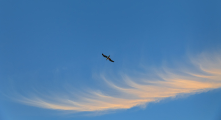 Flying seagull against blue sky with clouds in evening time Stock Photo