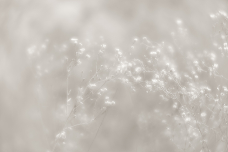 Blurred grass flowers background in high key. Dreamy beautiful background with meadow of flowers. Grass and flowers in soft focus. Defocused image. Reklamní fotografie