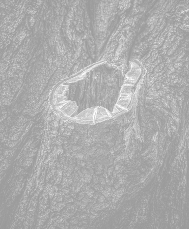 Old tree bark. Natural textured background. Image in light gray tonality
