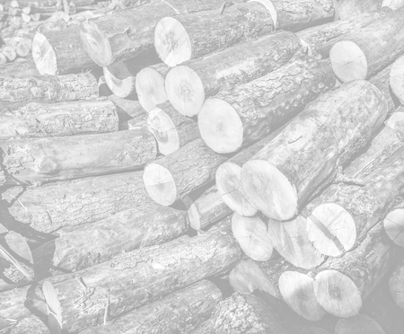 Pile of wood logs ready for winter. Image in light gray tonality