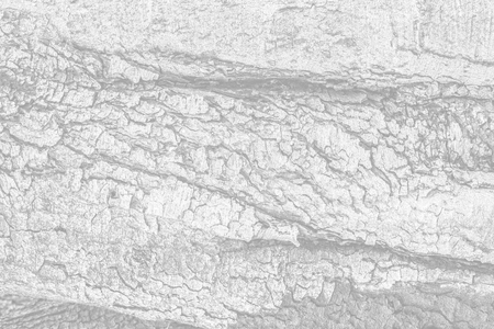 Old tree bark for natural textured background. Image in light gray tonality