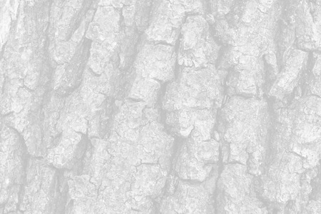 Old oak tree bark for natural textured background. Image in light gray tonality