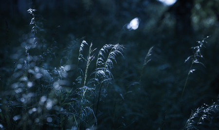 Natural background concept. Scene with wild grass on a sun light on blurred nature background