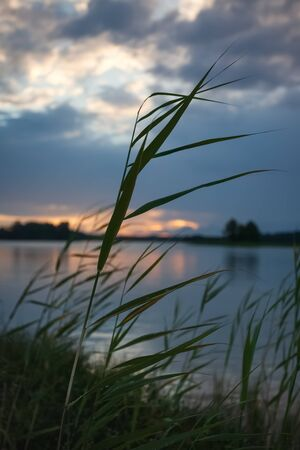 Grass and lake during sunset. Sunset on the lake. Beautiful natural landscape