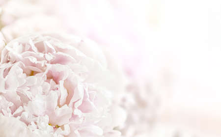 Floral background. Close up bouquet of beautiful flowers with copy space