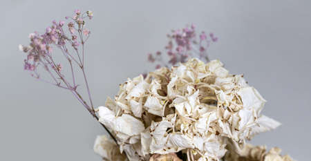Dry bouquet. Close-up image of dried flowers in a bouquet. Life and death concept. Withered flower background