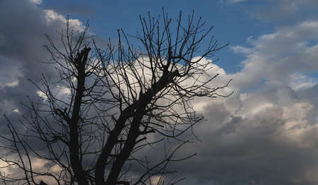 Silhouettes of trees without foliage on the background of a dramatic sky with clouds Banco de Imagens