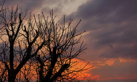 Silhouettes of trees without foliage against a dramatic sunset sky Banco de Imagens