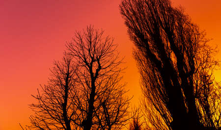 Silhouettes of bare branches of large trees against early morning blue pink orange and yellow colored sky Banco de Imagens