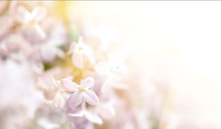 Close-up image of lilac flowers in sun light. Blurred image with soft focus. Natural background and texture. Imagens