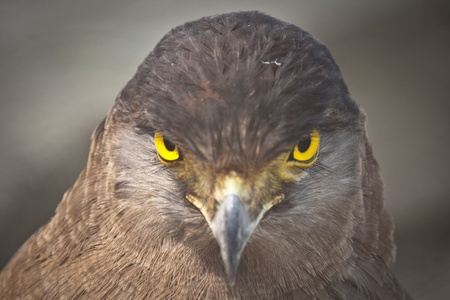 Closeup view of an Eagle