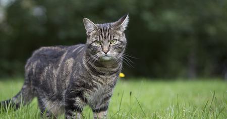 Cute cat looking at camera Stock Photo