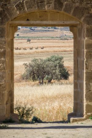 view through door: View through door of Saint Mamas Gothic Church ruins at the  deserted village of Ayios Sozomenos, Cyprus