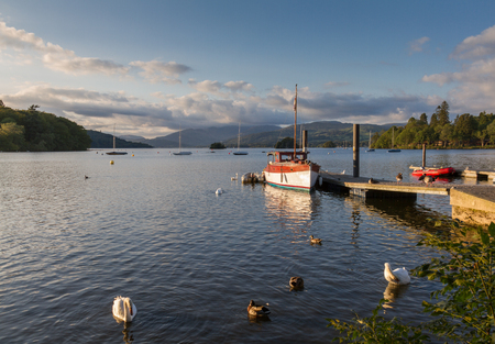 cumbria: Mute swans, ducks and fishing boat bathed in afternoon light in Lake Windermere in Bowness-on-Windermere, Cumbria