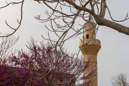 cyprus tree: Tree branches, blossomed tree and mosque in Kyrenia, Cyprus