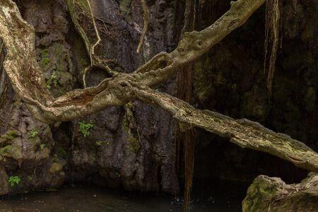 afrodita: Ba�os de Afrodita Gruta con estanque y fuente de agua en el Parque Nacional de Akamas, Paphos, Chipre