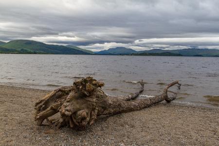 loch lomond: Cut tree trunk on the shores of lake Loch Lomond in Scotland with dramatic cloudscape. Photo taken near Duck Bay