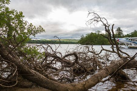 hydroplane: Cut tree branches on lake shore and hydroplane, Loch Lomond, Scotland Stock Photo