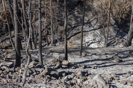 ecological disaster: Charred trees following a forest fire in Solea area in Troodos mountains in Cyprus.The June 2016 fire has been an ecological disaster.