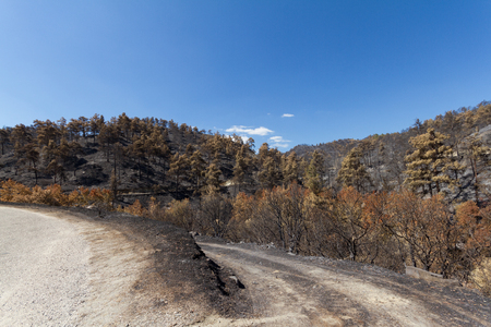 ecological disaster: Burned forest following a forest fire in Solea area in Troodos mountains in Cyprus.The June 2016 fire has been an ecological disaster.