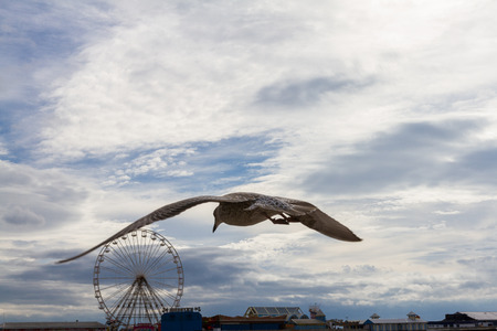 lancashire: Flying seagull against the sky and Blackpool Central Pier, Lankashire, UK Stock Photo