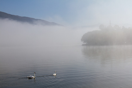Atmospheric scene of swans on Lake Pamvotis on a misty morning in Ioannina, Greece, with Aslan Pasha mosque in the background Stok Fotoğraf