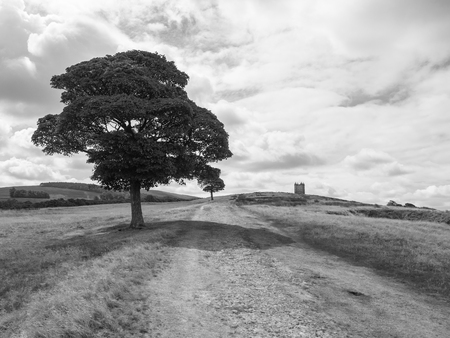 Path to The Cage tower in the distance in Lyme Park estate in monochrome. The estate is being managed by the National Trust and is located in the Peak District, Cheshire, UK