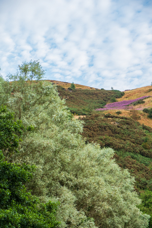 Beautiful colors of foliage on hills above St Margaret's Loch in Edinburgh, Scotland.